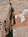 Eastern Cape Crag Lizard (Pseudocordylus microlepidotus fasciatus) male (29672307183).jpg