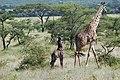 Eastern Serengeti 2012 06 01 3298 (7522727862).jpg