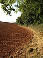 Edge of Cobhay Moor Plantation - geograph.org.uk - 1521581.jpg
