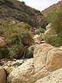 Ein Gedi, oásis junto ao Mar Morto, Israel.jpg