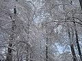 El Nino Snow Over Augusta Georgia - panoramio.jpg