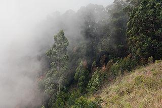 Sri Lanka montane rain forests