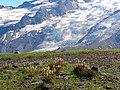 Emmons Glacier (09df8f13991d4b3884d9f7afbc74c41d).JPG