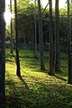 Enchanted Forest (2522234898).jpg
