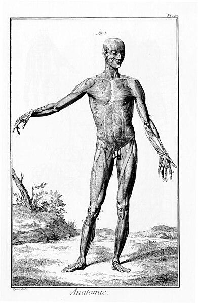 Ficheiro:Encyclopédie de Diderot, plate 1-143.jpg