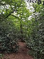 Epping Forest 20170727 111831 (49374317713).jpg