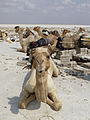 Ethiopie-Exploitation du sel au lac Karoum (29).jpg