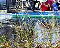 Everglades, Miami (8253442530).jpg