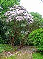 Exbury Gardens - Exbury, England - DSC03825.jpg