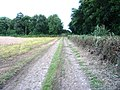 Farm track near Bescaby and Croxton Park - geograph.org.uk - 33218.jpg