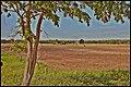 Farming (544012025).jpg