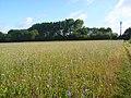 Farmland, Sonning - geograph.org.uk - 919695.jpg