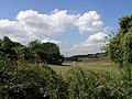 Farmland, not far from Chaldon - geograph.org.uk - 48354.jpg