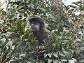 Fauna - Parque Nacional do Itatiaia.jpg