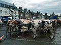 Fauville-en-Caux foire animaux de boucherie.jpg