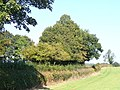 Field Near Tenements Farm - geograph.org.uk - 1513331.jpg