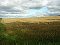 Field of Oats - geograph.org.uk - 234986.jpg