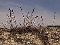 Filamentos de musgo (7951121826).jpg
