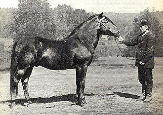 Finnhorse - A founding sire, Jaakko (Tt 118), photographed in 1882