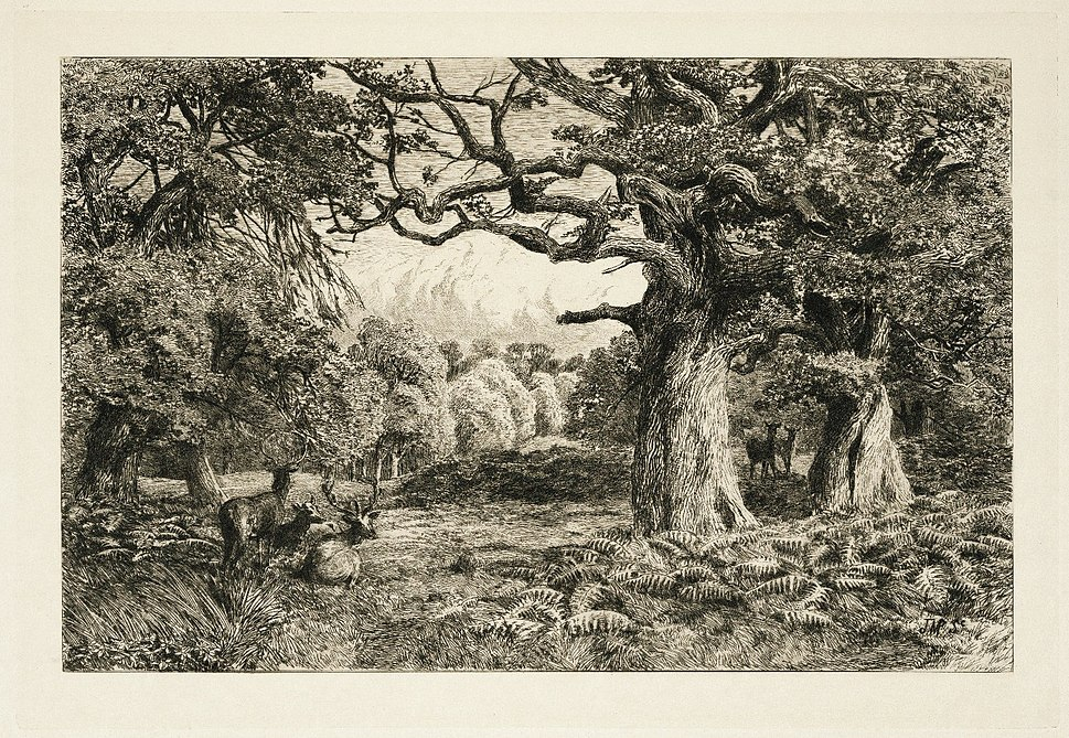 Fleay%27s Etching of the Forest of Arden