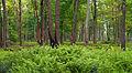 Flickr - Nicholas T - Upland Forest.jpg