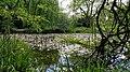 Flora Lake.jpg