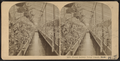 Floral Gallery, Long Branch, N.J, from Robert N. Dennis collection of stereoscopic views.png