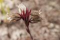 Flores da trilha do Mirante do Caim - Igatu 4.png