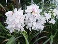 Flower1861.JPG