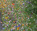 Flower Border 1 (5960707883).jpg