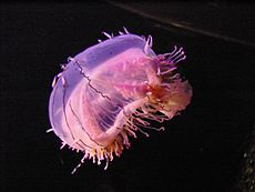 Flower Hat Jellyfish 2.jpg