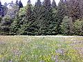 Flower Valley.jpg