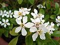 Flowers-Garden-Ireland-Plants.JPG