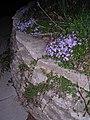Flowers - Flickr - eliduke.jpg