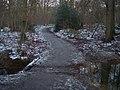 Footbridge and path junction in Blean Woods - geograph.org.uk - 1652830.jpg