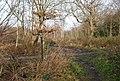 Footpath - Bridleway junction, Stock Wood - geograph.org.uk - 1133279.jpg