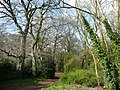 Footpath into Fennell's Wood - geograph.org.uk - 754747.jpg