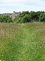 Footpath through a field west of Treen - geograph.org.uk - 1388065.jpg
