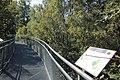 Forêt de Bon-Secours 03.jpg
