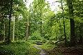 Forêt de Mormal 05.jpg