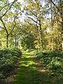 Forêt domaniale de Flines-lès-Mortagne.JPG