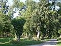 Forêt près de l'Isleau - panoramio.jpg