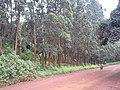 Forêt sacré chefferie Bafoussam.jpg