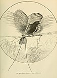Foreign birds for cage and aviary (1910) (14568883900).jpg