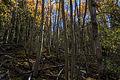 Forest Floor (5090270492).jpg