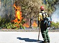 Forest Service firefighter monitors a prescribed burn. (8537439624).jpg