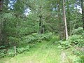 Forest footpath to Cwmheisian - geograph.org.uk - 494123.jpg