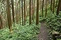 Forest in Mt.Kesoku 03.jpg