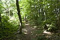 Forest in Mt.Kinoko 02.jpg