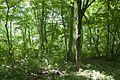 Forest in Mt.Nandai 05.jpg